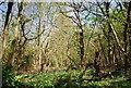TQ3750 : Round Wood by N Chadwick