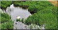 J2866 : Disused Lagan canal at Lambeg by Albert Bridge
