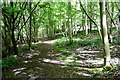 SU7990 : Footpath in Mousell's Wood by Graham Horn