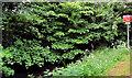 J2865 : The Lagan canal at Hilden (2) by Albert Bridge