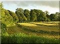 SS8712 : Mown grass, Page's Cross by Derek Harper