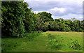 J4782 : Field and trees, Crawfordsburn Country Park (4) by Albert Bridge