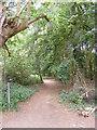 TM2446 : Footpath to Martlesham Heath by Geographer