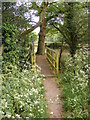 TM3154 : Footbridge on the Footpath to Loudham Hall Road by Adrian Cable