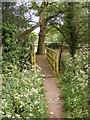 TM3154 : Footbridge on the Footpath to Loudham Hall Road by Geographer