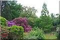 TL7604 : Danbury Country Park Lower Lake by Glyn Baker