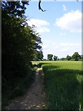 TM3761 : Footpath to the A12 Saxmundham Bypass & Deadman's Lane by Adrian Cable