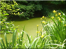 TQ1450 : Woodland Pond, Ranmore by Colin Smith