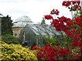 NT2475 : Royal Botanic Garden Edinburgh : Glasshouses and Azaleas by Richard West