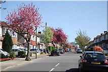TQ3765 : Blossom, Hawkhurst Way by N Chadwick