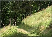 SX9050 : Path at Coleton Fishacre by Derek Harper