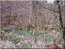 NM5643 : Woodland, Salen by Richard Webb