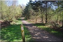 TQ4251 : Greensand Way, High Chart by N Chadwick
