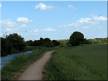TL4311 : Swallows over the Stort by Stephen Craven