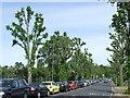 TQ3670 : Lennard Road, Beckenham by Malc McDonald