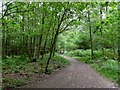 SZ0096 : Broadstone, bridleway by Mike Faherty