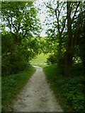 TQ2813 : Bridleway in Wellcombe Bottom by Shazz