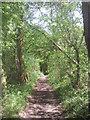 TQ4561 : Bridleway through a shaw by Marathon