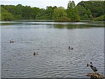 SE2741 : The Lake at Golden Acre Park by Oliver Dixon