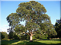 NZ0461 : Tree, Bywell by Stephen Richards