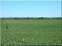 SE7675 : Farmland near Riverdene Farm by JThomas