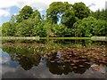 NR8786 : Lilypads on Kilmory Loch by Patrick Mackie