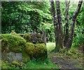 NR8786 : Waymarker on woodland path by Patrick Mackie