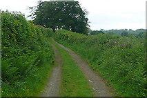 SX4975 : On the West Devon Way by Graham Horn