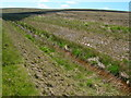 SD9815 : Overgrown waterworks channel by John Darch
