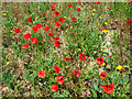 TG4905 : Poppies by Eastles Farm, Burgh Castle by Evelyn Simak