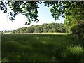 SS8916 : Field surrounded by trees, Stoney Lane Hill by Derek Harper