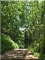 SS9417 : Lane through Hatherland Wood by Derek Harper