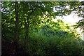 SP5704 : Trees growing on the former railway bridge by Steve Daniels