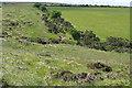SX5283 : Access land near Willsworthy Camp by Graham Horn