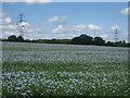 SU6562 : Field of flax (linum usitatissimum) by Sandy B