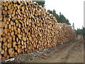 NY5182 : Log piles in Kershope Forest by Rod Allday