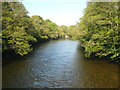 NY5228 : The River Eamont below Eamont Bridge by Rod Allday