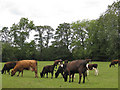 SE6481 : Cattle pasture off Mill Street by Pauline E