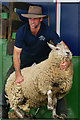 TQ3429 : The Sheep Show (1) by Peter Trimming