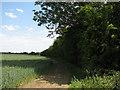TL4960 : Overgrown railway line by John Sutton