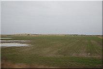 NU0445 : Farmland near Goswick Golf Club by N Chadwick