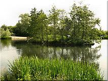 SJ9599 : The Island, Stamford Park Upper Lake by David Dixon