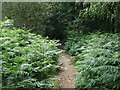 TQ0116 : Footpath through Watersfield Common by Dave Spicer