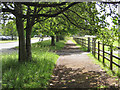 NZ3613 : Shady walk north of the playing fields by Pauline E