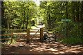 SK6272 : Dukeries Trail by Richard Croft