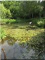 SU8141 : Woodland pond by Sandy B
