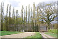 TQ7934 : Poplar trees and Barn, Little Coursehorn by N Chadwick