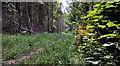 J4477 : Path, Cairn Wood, Craigantlet (5) by Albert Bridge