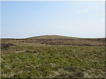 SN8395 : View towards Bryn y Fedwen by David Purchase