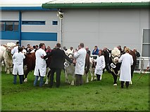 NT1473 : Best beef breed, Royal Highland Show 2011 by Richard Webb
